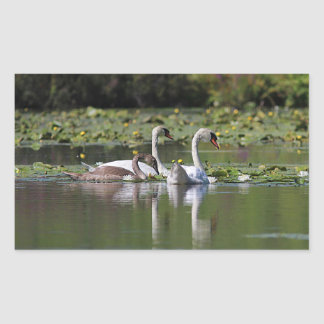 Mute swan family swimming sticker