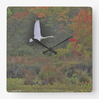 Mute Swan in Flight Square Wall Clock