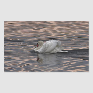 Mute swan swimming at sunset sticker