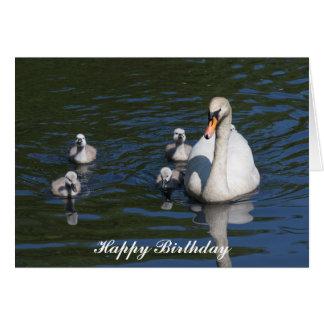 Mute Swan with Cygnets Birthday Card