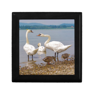 Mute swans and ducks gift box