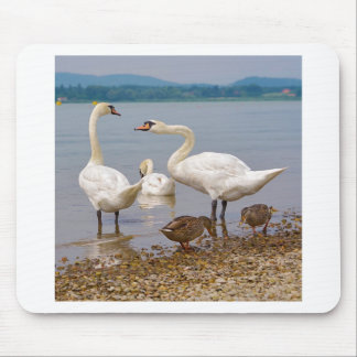 Mute swans and ducks mouse pad
