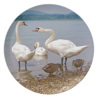 Mute swans and ducks plate