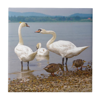 Mute swans and ducks tile