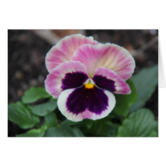 Muted Purple Pansy, Blank Floral Notes