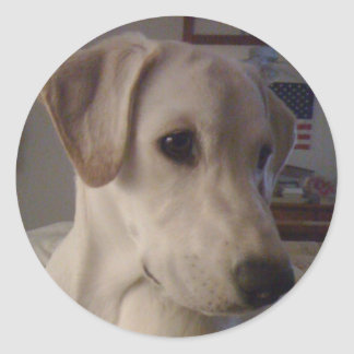 My Baby Pooch Round Stickers