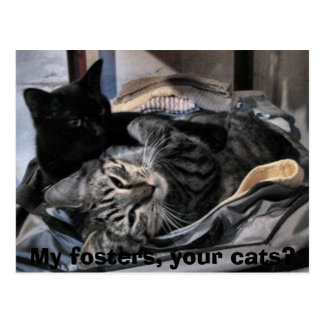 My fosters, your cats? postcard