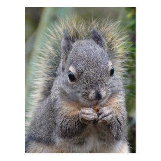 My Friend Fuzzy Postcard