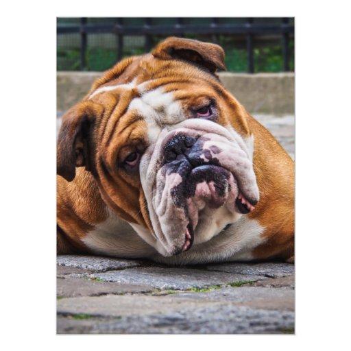 My Grumpy Dog is Saying Bulldog !!! Photograph