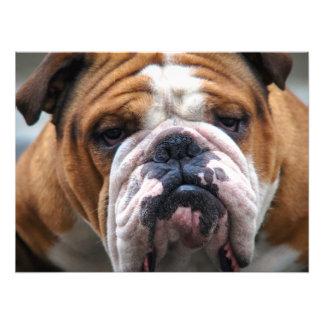 My Grumpy Dog is Saying Bulldog Photo Print