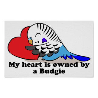 My heart belongs to a blue budgie poster