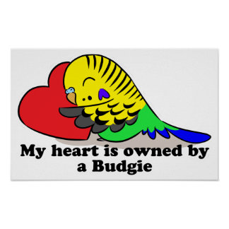 My heart belongs to a green budgie poster