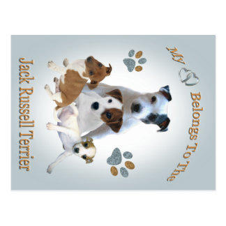 My Heart Belongs To A Jack Russell Postcard