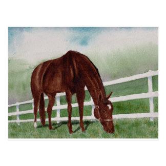 My Horse Postcard