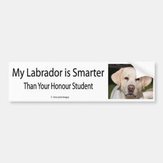 My Labrador is Smarter Than Your Honor Student Bum Bumper Sticker