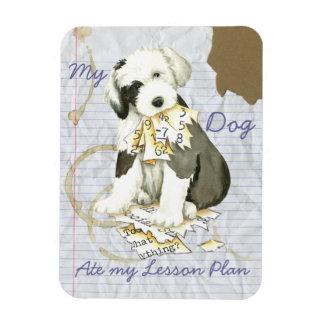 My Old English Sheepdog Ate my Lesson Plan Rectangular Photo Magnet