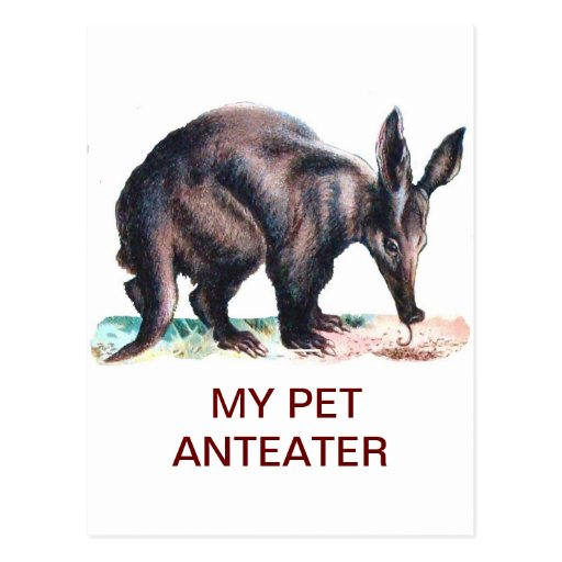 MY PET ANTEATER POST CARDS