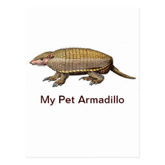 My Pet Armadillo - Cute & Cuddly - YES ! Postcards