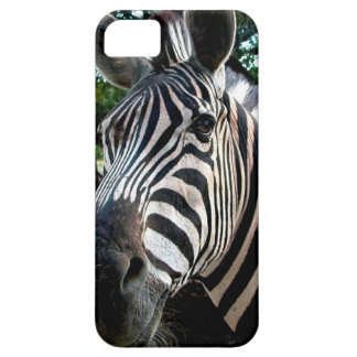 My  Strippy Friend iPhone 5 Covers