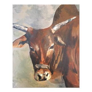 My Zebu Bull Print 20X16 Art Photo
