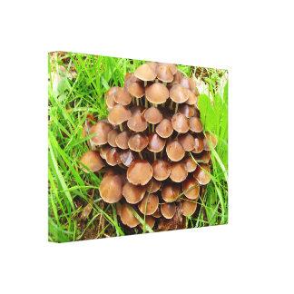 Mycena inclinata Mushroom Canva Print