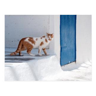 Mykonos cat - Postcard