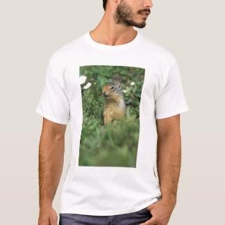 N.A., Canada, Alberta, Banff NP, Columbian T-Shirt