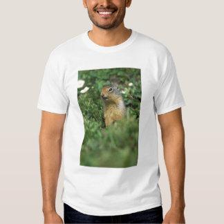 N.A., Canada, Alberta, Banff NP, Columbian Tee Shirts
