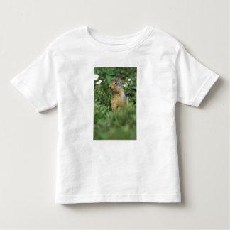 N.A., Canada, Alberta, Banff NP, Columbian Toddler T-shirt