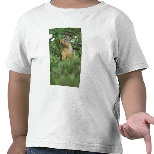 N.A., Canada, Alberta, Banff NP, Columbian T-shirts