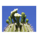 N.A., USA, Arizona, Tucson, Sonora Desert 2 Postcards