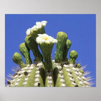N.A., USA, Arizona, Tucson, Sonora Desert 2 Poster