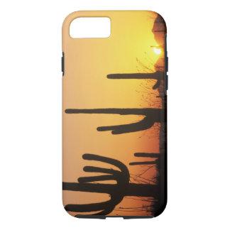 N.A., USA, AZ, Saguaro NP, Saguaro Sunset iPhone 7 Case
