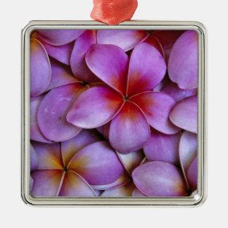 N.A., USA, Maui, Hawaii. Pink Plumeria blossoms. Metal Ornament
