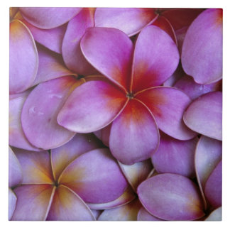 N.A., USA, Maui, Hawaii. Pink Plumeria blossoms. Tiles
