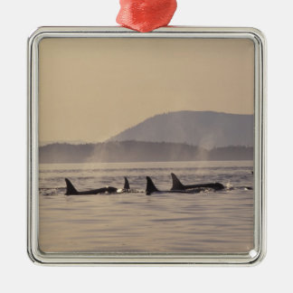 N.A., USA, Washington, San Juan Islands Orca Metal Ornament