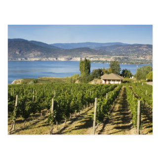 NA; Canada; British Columbia; Okanagan Valley; Postcard