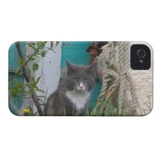 Na, Canada, île Prince Edouard, Malpeque 2 Coques Case-Mate iPhone 4