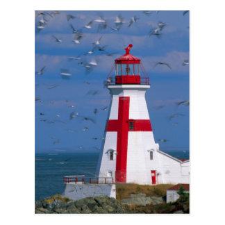 NA, Canada, New Brunswick, Campobello Island. 8 Postcard