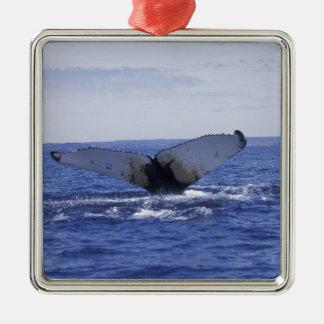NA, Canada, Newfoundland, Trinity Bay. Humpback Metal Ornament