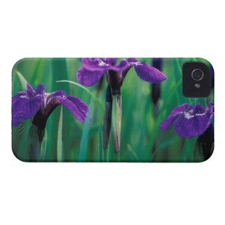 Na, Etats-Unis, Alaska, île de chevalier, iris Coque iPhone 4 Case-Mate