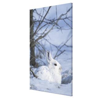 NA, USA, Alaska. Arctic National Wildlife Canvas Print