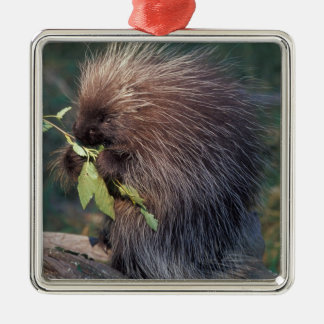 NA, USA, Alaska, Captive porcupine Metal Ornament