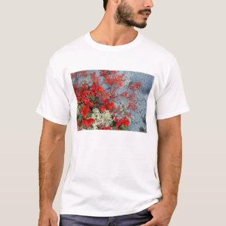 NA, USA, Alaska, Denali NP, Bear berry and T-Shirt