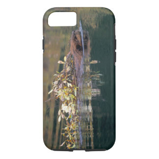 NA, USA, Alaska, Denali NP, Beaver collecting iPhone 7 Case
