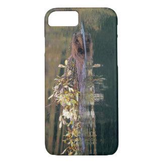 NA, USA, Alaska, Denali NP, Beaver collecting iPhone 7 Case