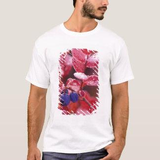 NA, USA, Alaska, Denali NP, Blue berries in T-Shirt