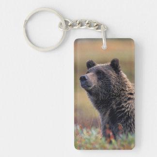 NA, USA, Alaska, Denali NP, Grizzly bear Double-Sided Rectangular Acrylic Keychain