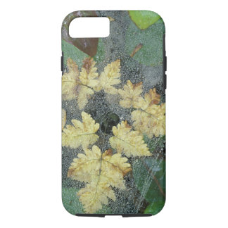NA, USA, Alaska, Nancy Lake. Dew on spiderweb iPhone 7 Case