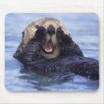 NA, USA, Alaska. Sea otters are the largest Mousepad